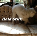 Hold Still!, as listed under Pets