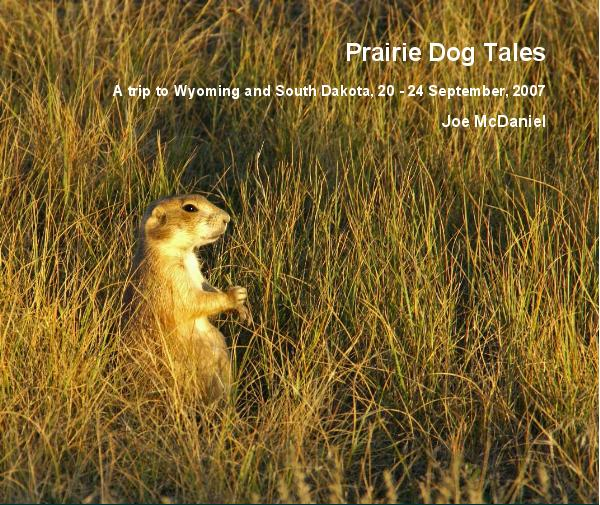 View Prairie Dog Tales by Joe McDaniel