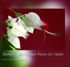 View Blumen by Sylke Scholz