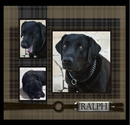 Ralph Labrador, as listed under Pets