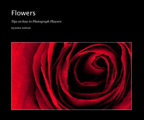 View Flowers by Janice Sullivan