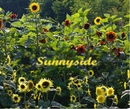 Sunnyside, as listed under Home & Garden