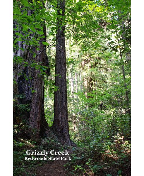 View Grizzly Creek Redwoods State Park by Greg Hudson