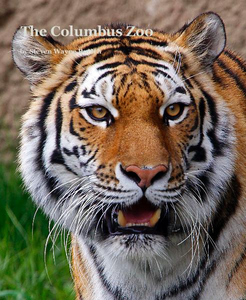 View The Columbus Zoo by Steven Wayne Rotsch