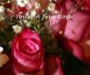 You're A True Rose - Religion & Spirituality photo book