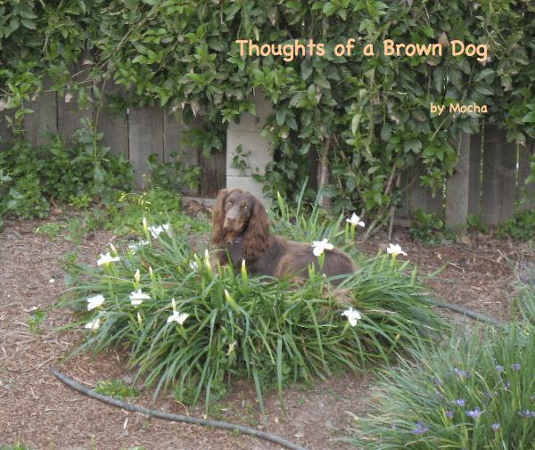 View Thoughts of a Brown Dog by Mocha