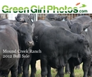 Mound Creek Ranch 2012 Bull Sale - Business photo book