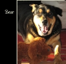 Bear, as listed under Pets