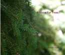 A Voice For Trees - Arts & Photography photo book