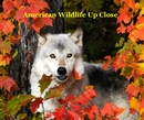 American Wildlife Up Close - Arts & Photography photo book