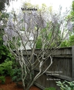 Wisteria, as listed under Home & Garden